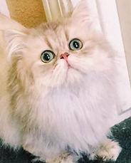 kitten (1 of 1)-3.jpg
