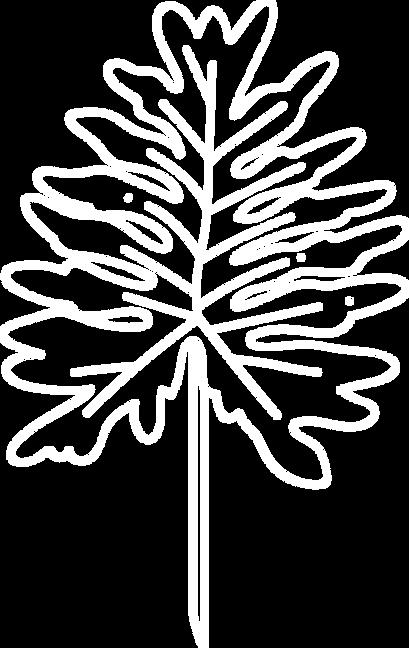 Floral Logo Elements - 50 White.png