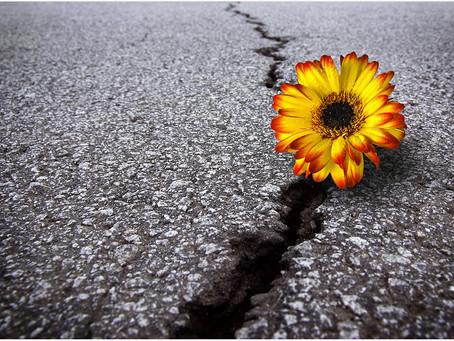 A prática da liderança resiliente.