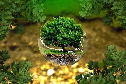 Árvore kompack.jpg