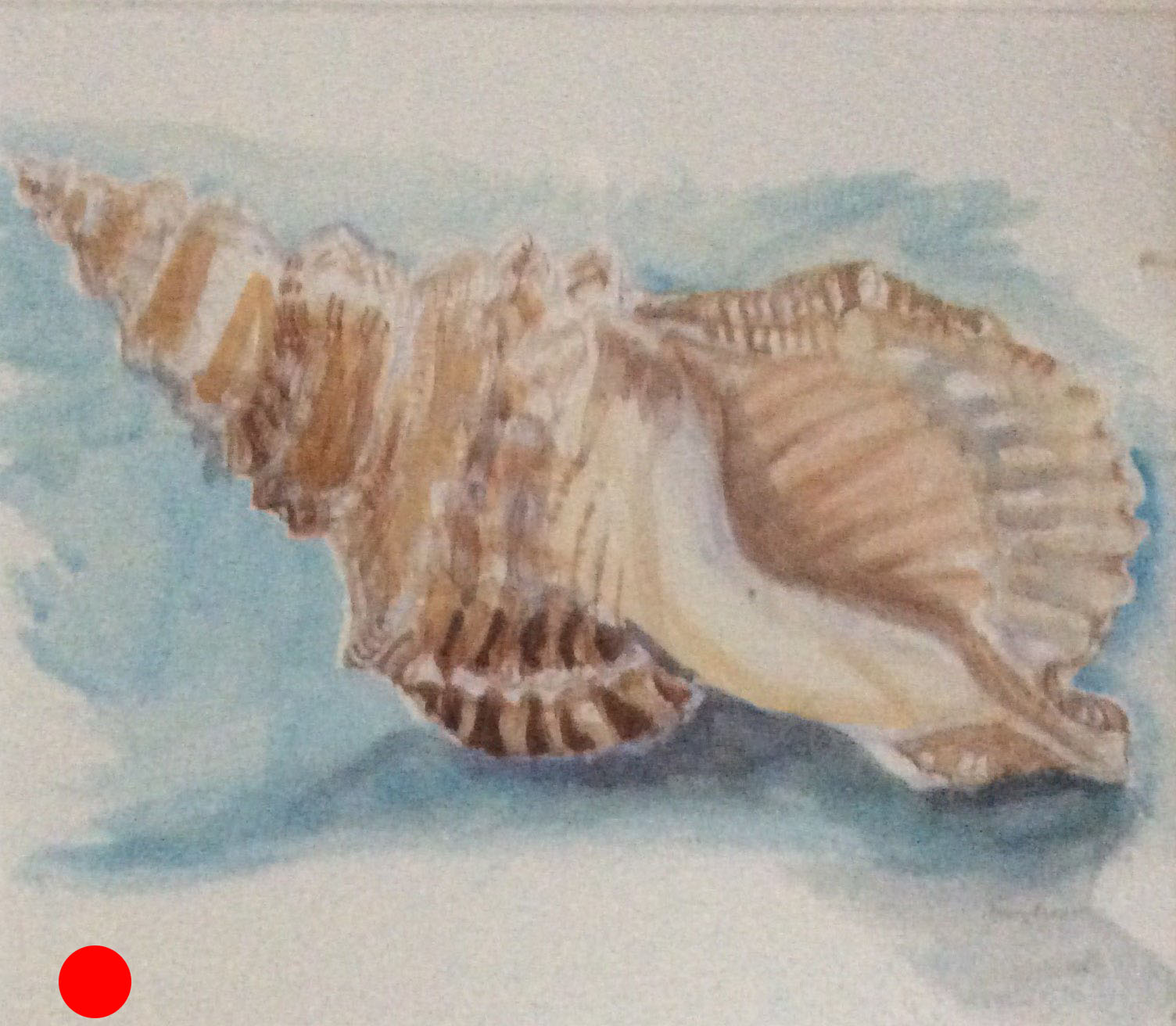 Shell watercolour 27.5x24 SOLD