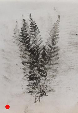 Ferns monprint 21x30 SOLD