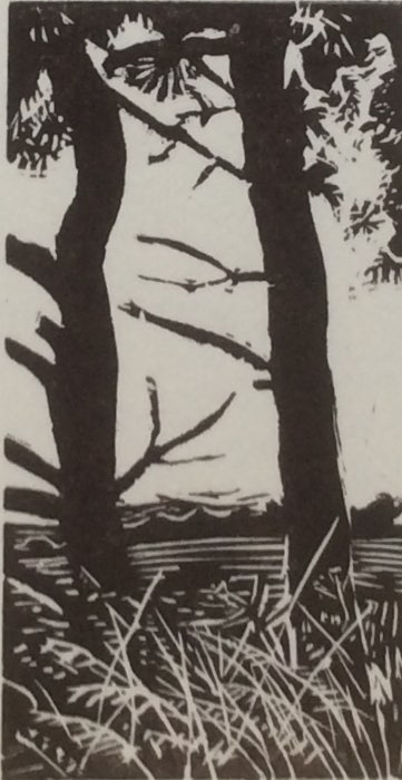 Pine trees above Berwick St John wood engraving 6x8.5