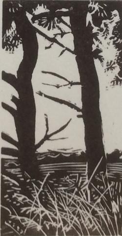 Pine trees above Berwick St John wood engraving 6x8.5