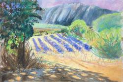 Lavender at Lioux pastel 56x38