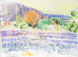 Lavender at Lioux 2 pastel 59x42