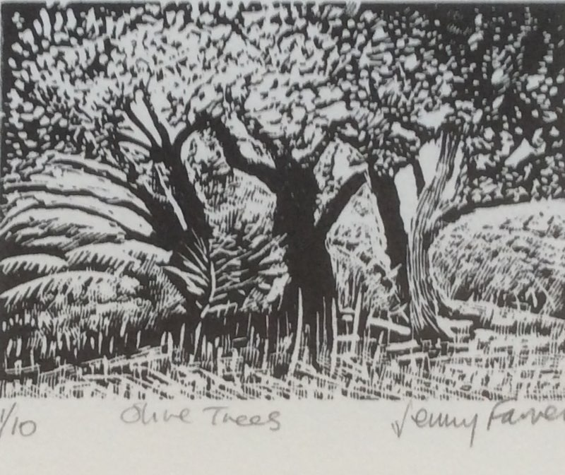 Olive trees wood engraving 7x9