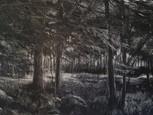 """Holzweg 2"", 40 x 60 cm, oil on canvas, 2020, (Price: 650 EUR)"