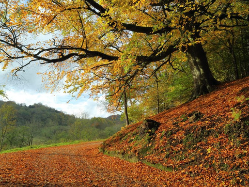 Igniting Passion in Autumn - Elevating your Space for the Seasons Ahead