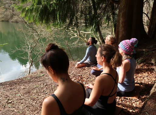 What on earth is Forest Bathing and how can it help you?