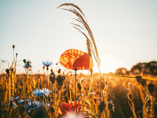 Abundant August - Nurturing yourself at home, our Lymphatic System and the importance of creativity