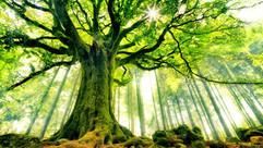 Retreats in nature.jpg