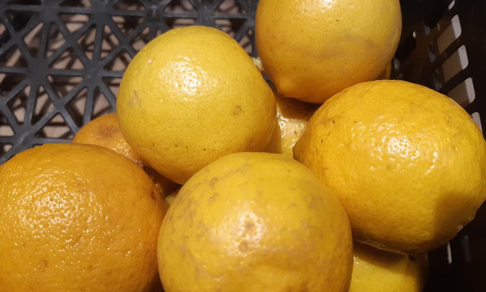 Citrons jaunes 500g (environ 4/5 pièces)