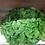 Thumbnail: Salade