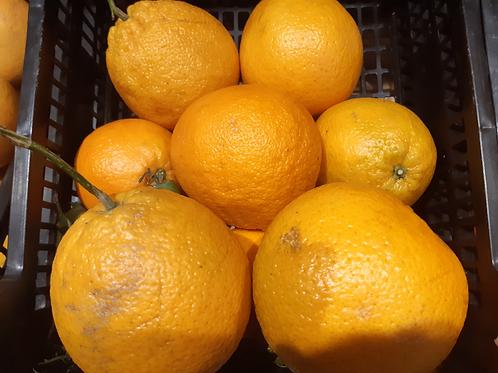 Oranges 500g (environ 2/3 pièces)