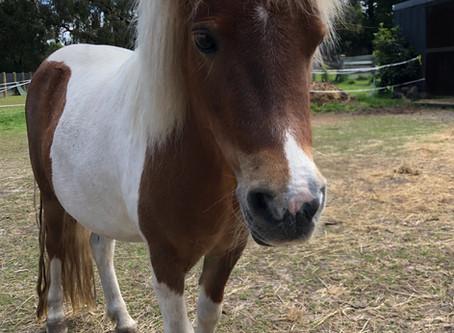 My horse has laminitis, what should I do?