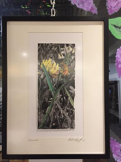"""Australia Bee"" Enhanced Photo | Michael Gorman"
