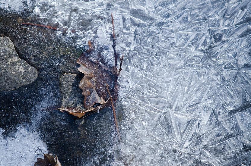 """Fall On Ice, 2019"" | by Michael Gorman"