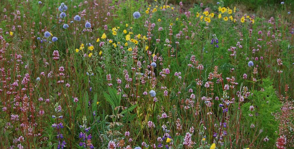 Willamette Valley Pollinator Mix