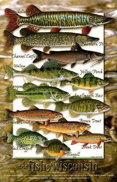 Fish of Wisconsin Poster