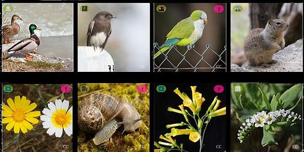 Flora=Fauna-Silvestre-Parque-Morelos_edi