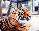 Mandy la Tigresa