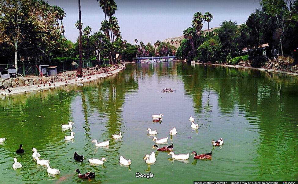 Parque-Morelos-lago.jpg
