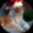 Christmas-Tiger.png