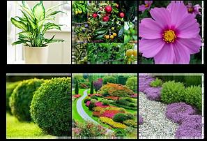 Catalogo-Plantas-Parque-Morelos_edited.p