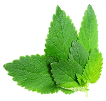 kisspng-lemon-balm-mints-herb-leaf-thai-