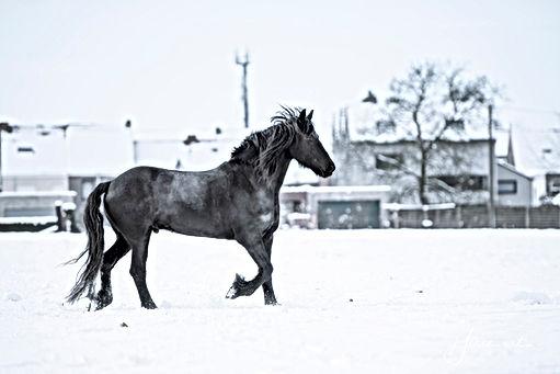 2019-01-30 snow kudde-kleur-small jpg_04