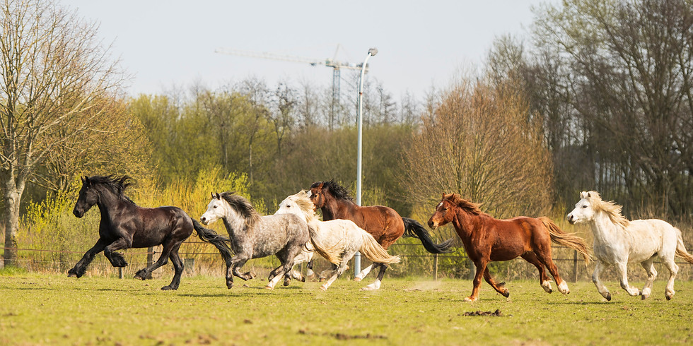 The power of Galop training stages juli-aug