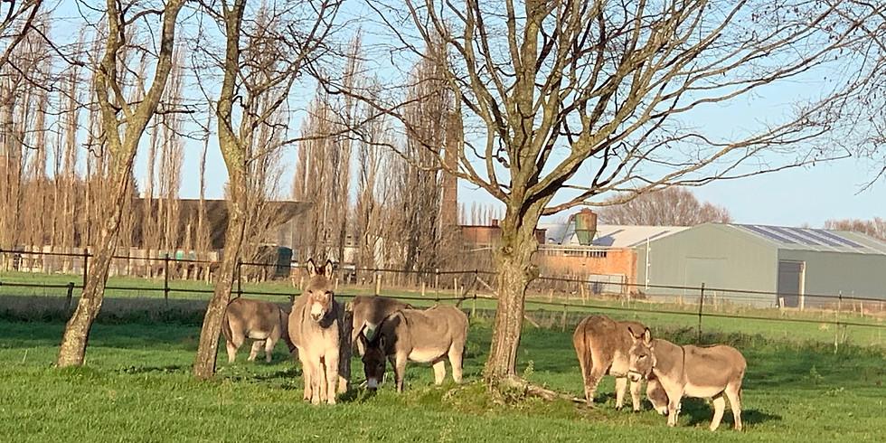 GRATIS Prijskamp voor ezels, paarden en pony's