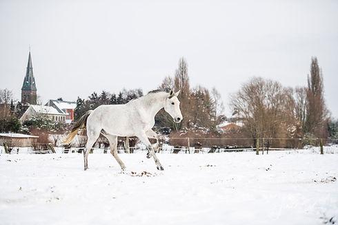 2019-01-30 snow kudde-kleur-small jpg_03