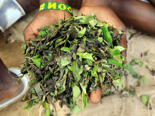 COVID-induced khat shortage adds to health problems in Somalia
