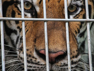 There is a call for combating wildlife trafficking, illegal hunting