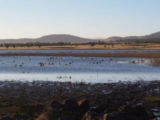 Lake Cheleleka at risk of drying up