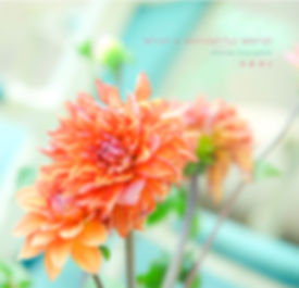 cover-s_0325 のコピー.jpg