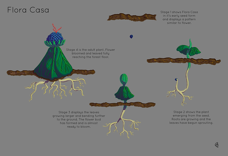 The Flora Casa Life Cycle.png