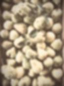 Pear%20Harvest_edited.jpg