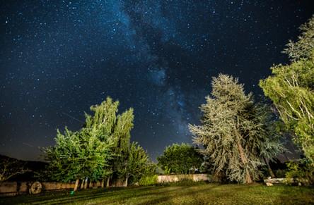 Le jardin, la nuit