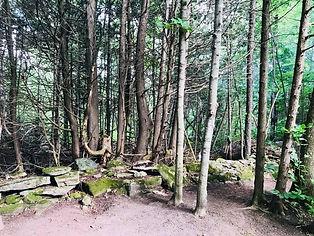 healingforest.jpg