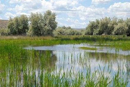 Il Wetland Mitigation Photo 2020 (002).j