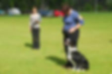 Perfecting your dog training skills so that your dog comes when called and walks nicely on lead through to competitive obedience skills and more