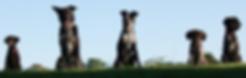 Dog%20line-up_edited.jpg