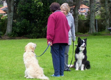 Polite and calm around other dogs.jpg