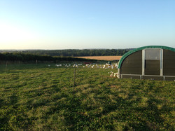Dorset free range chicken