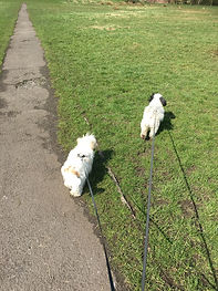 Small group walks. Dog walker in Bolton. Small dog walks
