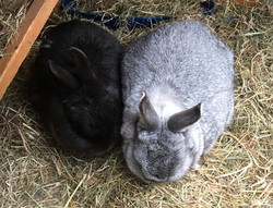 Flopsy and Davey