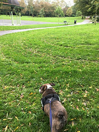Solo walks with Bolton Dog walker. Small dogs